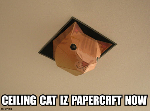celing_box_cat.jpg